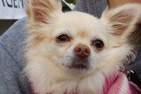 Pet Trauma Symptoms And Advice