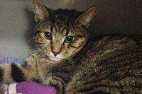 Stray Cat Reunited With Owner