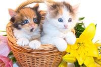 Lilies Are Very Toxic To Cats