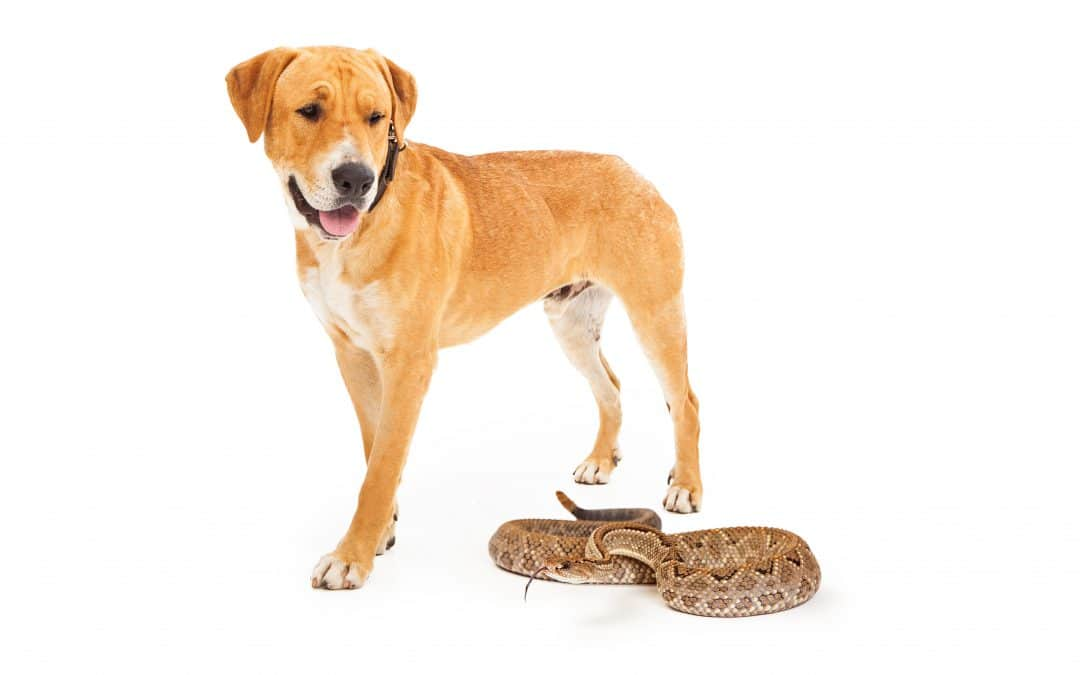 4 Tips to Keep Your Pet Safe From Snake Bites