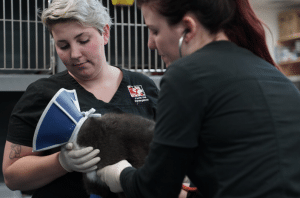 Join Perth Vet Emergency team as the Veterinary Nurse Manager